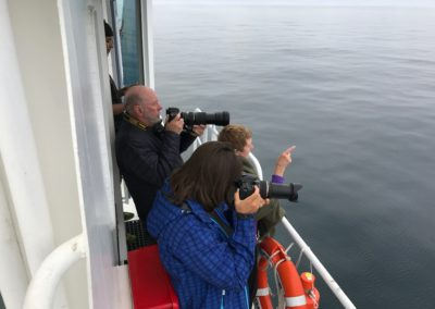 Photographing whales - Heather Thorkelson